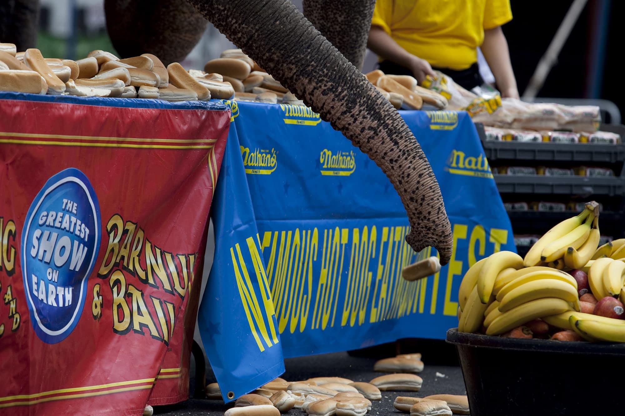 Human versus elephant eating contest on Coney Island