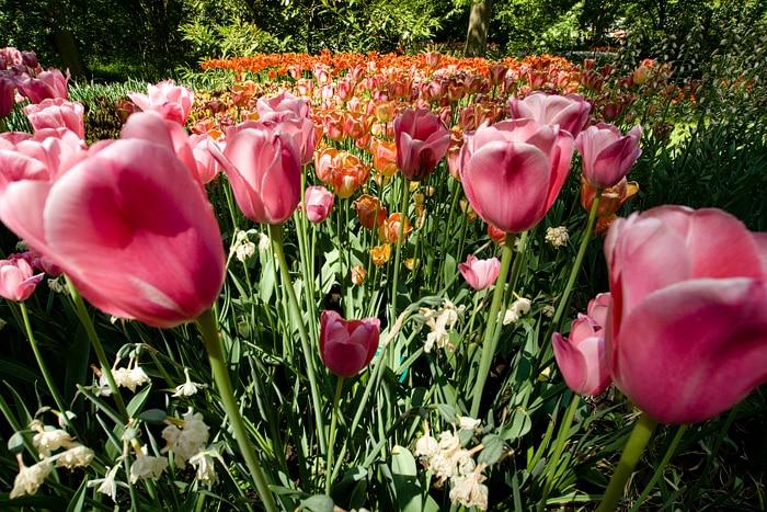 amsterdamflowers.jpg