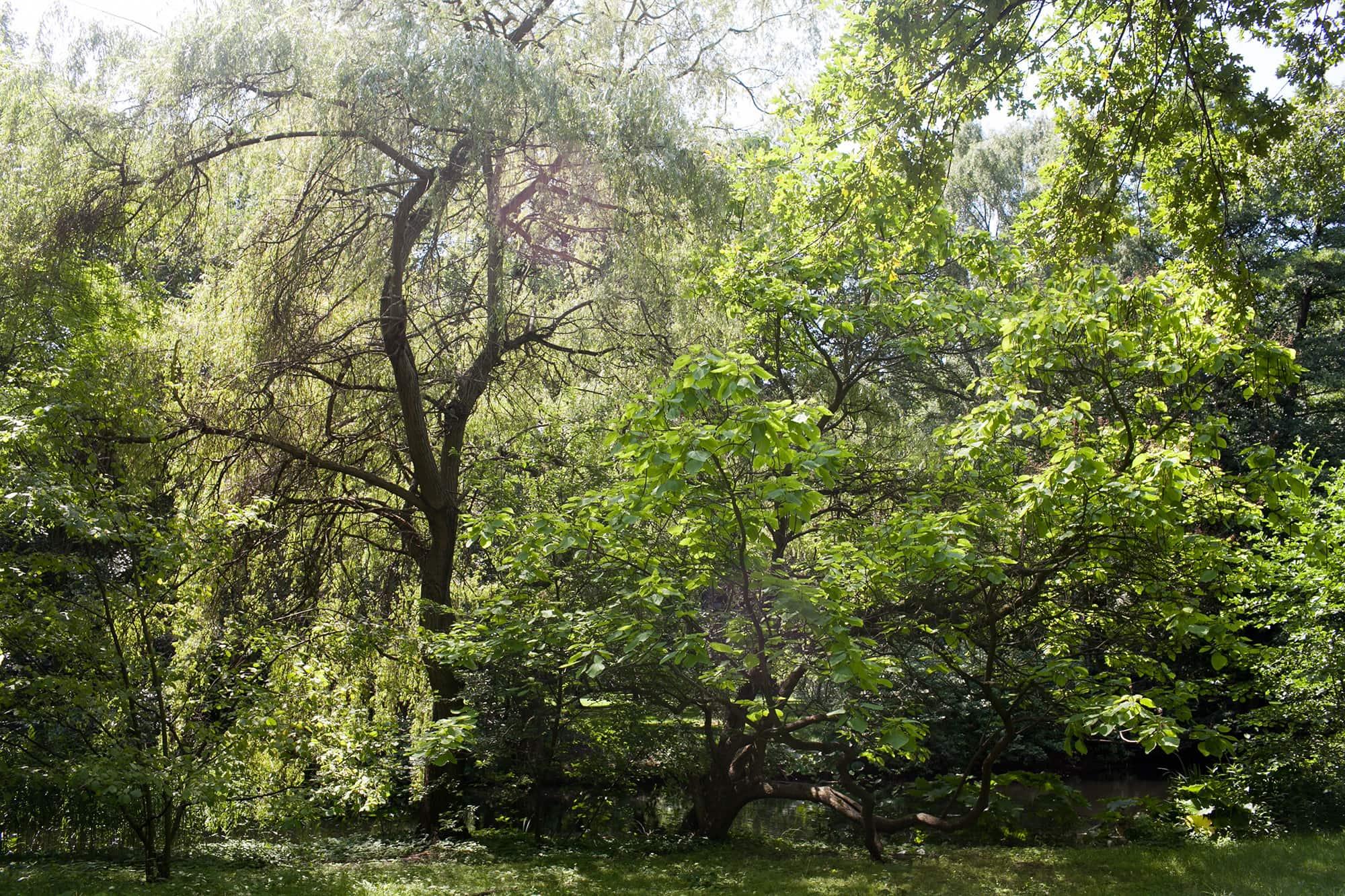 Tiergarten in Berlin.