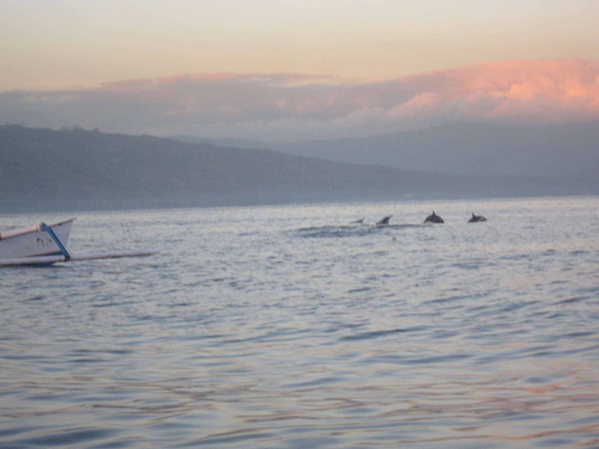 Dolphin watching in Lovina, Bali, Indonesia