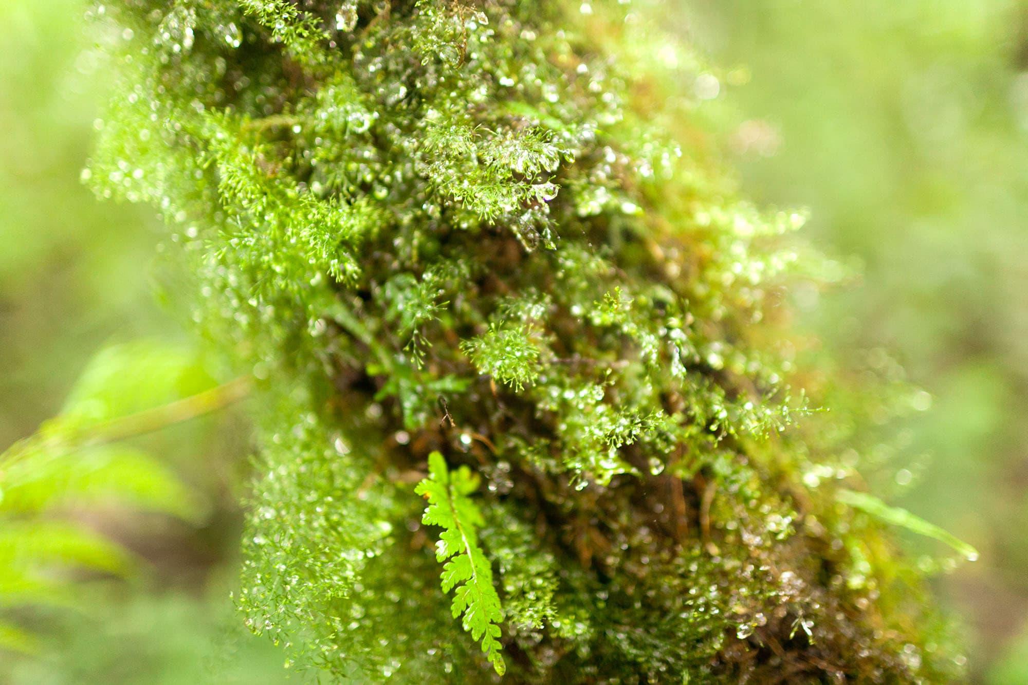 Monteverde Cloud Forest Reserve in Costa Rica