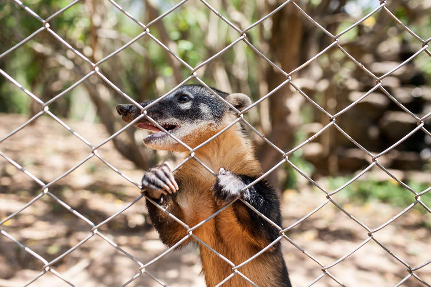 Refugio Zoologico refuge for rescued animals in Samaipata, Bolivia